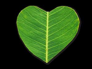 Green-heart-600x450